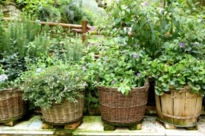 Wiccan Gardening for Beginners