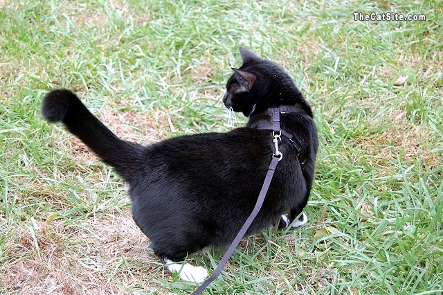Cats On a Leash